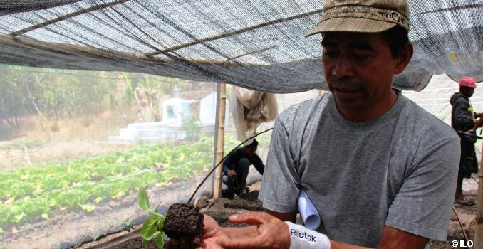 Guido Ximenes Sequeira, Director of Josephina Farm explains when seedlings are ready to be transplanted to vegetable fields, Timor Leste. Photo: Annabella Skof ILO.