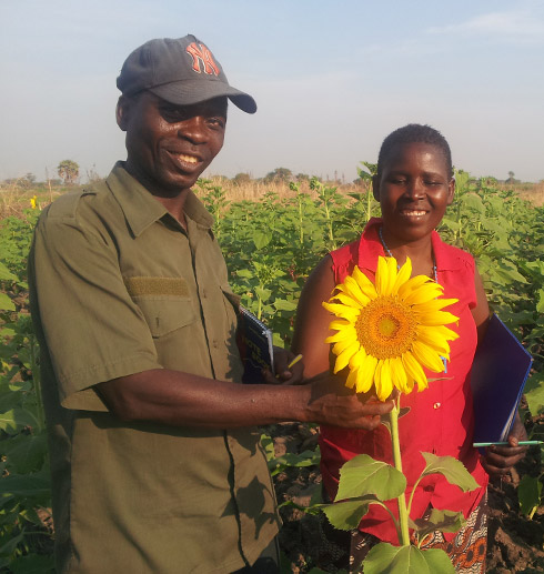 Sunflower Producers & members of Mnyororo Producers Group, Chunya District, Mbeya Region