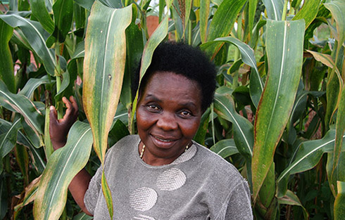 Maize Farmer Rosemary Kadzitche with her crop