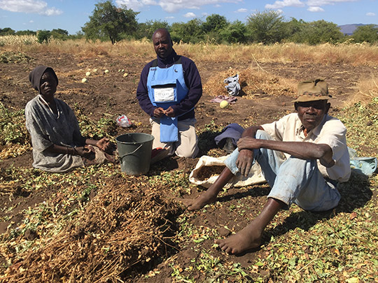 The Chifendus and Halo Demining Supervisor July shelling harvested ground nuts in a field adjacent to the one Halo is currently clearing.
